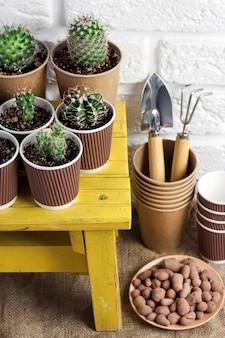 小さな黄色いテーブルの上の紙コップのサボテンと多肉植物のコレクション