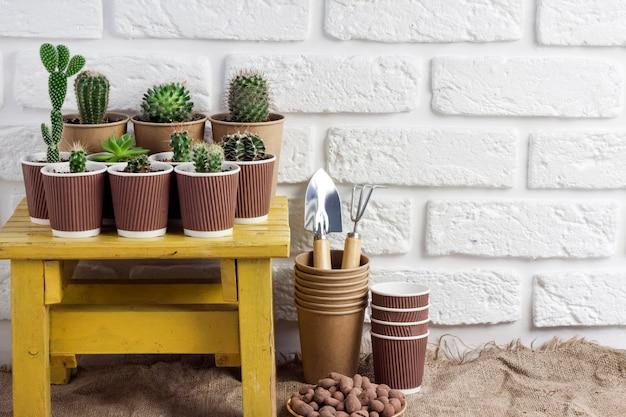 작은 노란색 탁자에 있는 종이컵에 선인장과 즙이 많은 식물 컬렉션