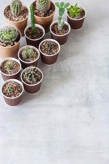 종이컵에 선인장과 즙이 많은 식물 수집