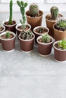 작은 종이컵에 선인장과 즙이 많은 식물 컬렉션. 집과 마당. 복사 공간