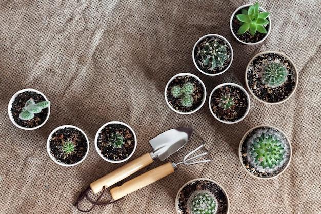작은 종이컵에 선인장과 즙이 많은 식물 컬렉션. 집과 마당. 평평한 평지, 평면도, 복사 공간