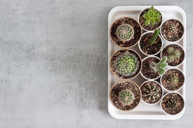쟁반에 작은 종이컵에 선인장과 즙이 많은 식물 수집