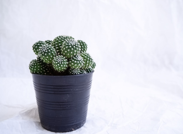 Cactus in black plastic pot, put a t the left side of grunge surface