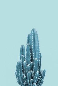 Cactus on blue background