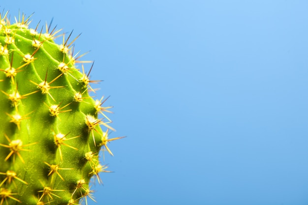 Cactus on blue  closeup