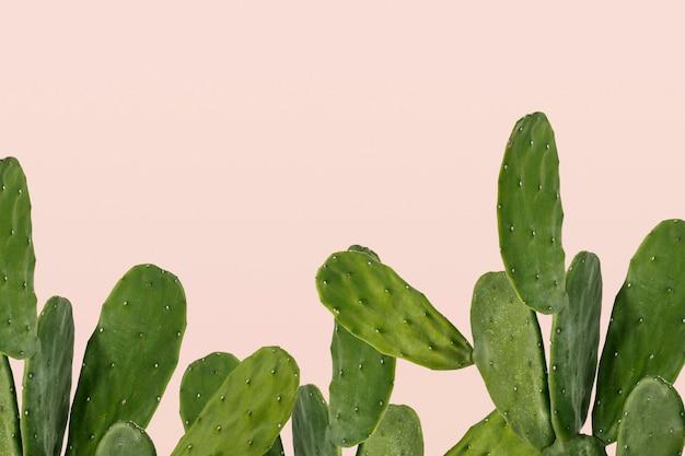Cactus border on pink background