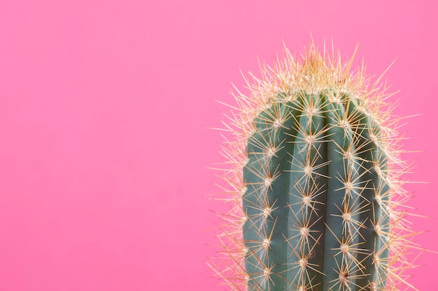 Cactus over the bright background with copy space