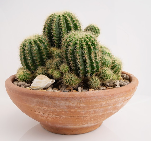 Cactus in brown clay pot over white surface