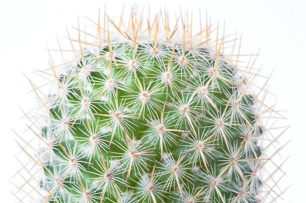 Cactus in brown pot on white background isolated.