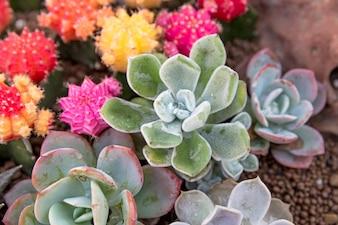 Cactus, Cactus in a Cactus garden