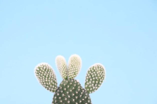 Cactus closeup on blue background