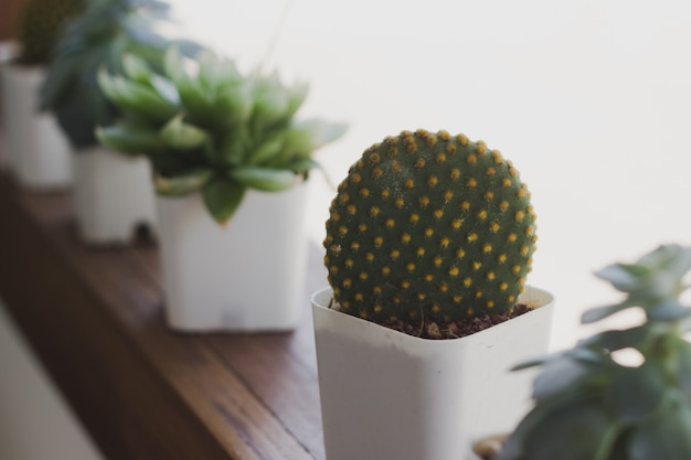 Cactus in a coffee shop