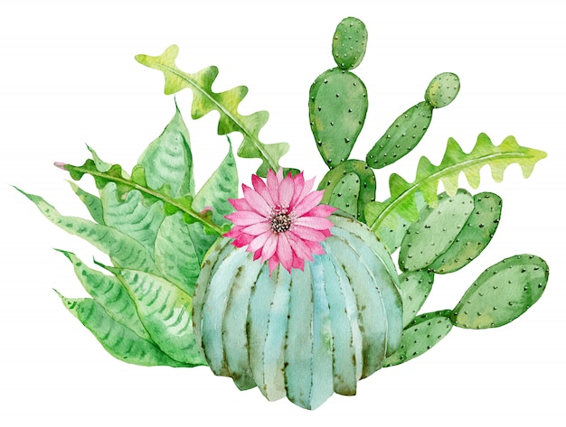 Cactus composition. watercolor hand-drawn illustration isolated. tropical home and garden decoration.