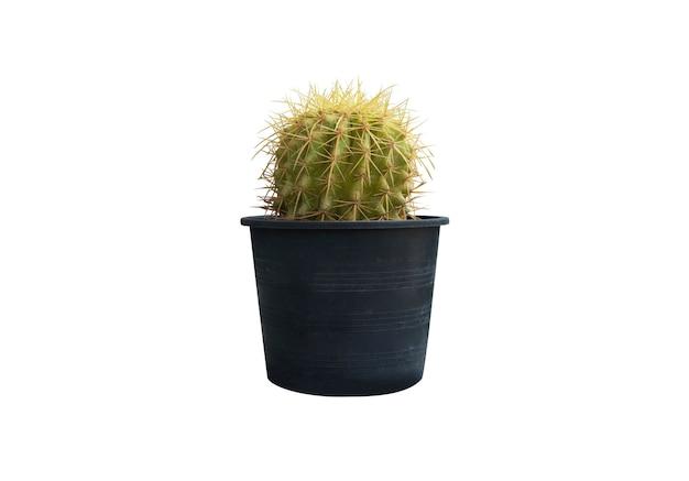 Cactus die cut on white background
