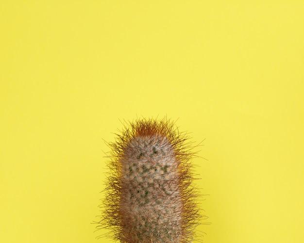 Cactus fashion design. minimal fashion stillife. trendy bright colors.