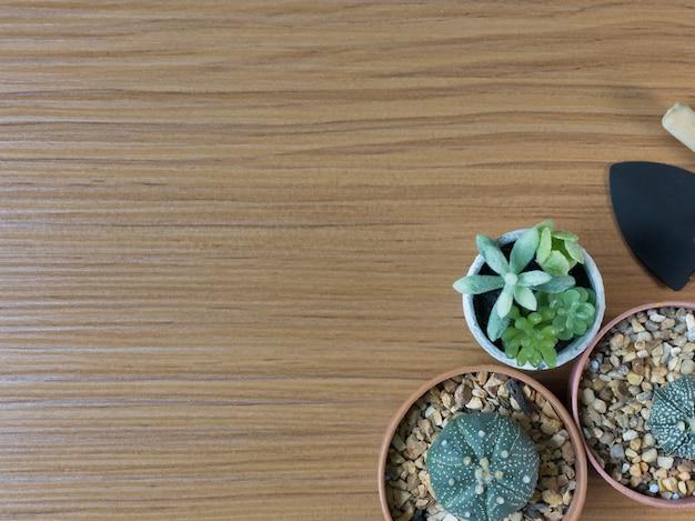 Cactus flat lay on wood floor background.