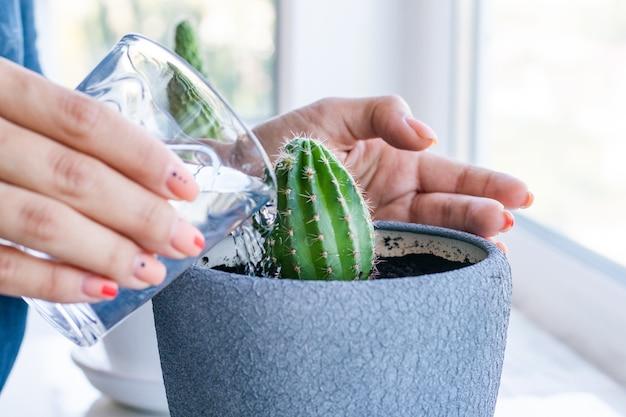 白いテーブルと明るい背景の上の鍋にサボテンの花。観葉植物とインテリアのコンセプト。サボテンは、ある植木鉢から別の植木鉢に植え替えられ、水を与えられています。