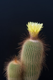 Cactus flower isolated