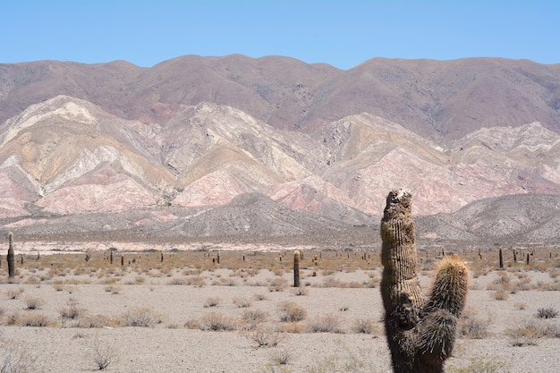 살타, 아르헨티나의 선인장 숲입니다.