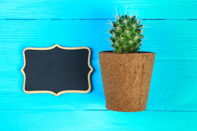 Cactus in front of classroom chalk board. back to school concept with copy space.