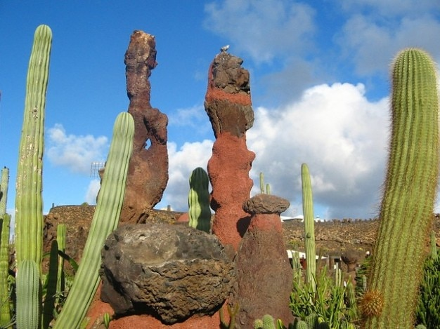 Cactus garden places lanzarote spain interest
