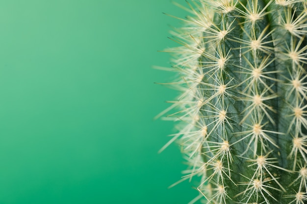 Cactus on green background, close up. house plant
