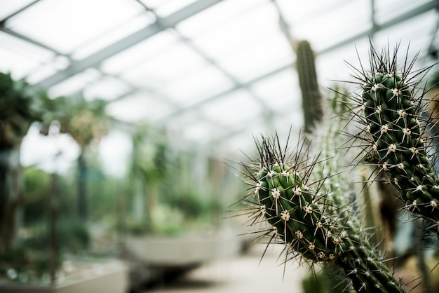 Cactus in a greenhouse.