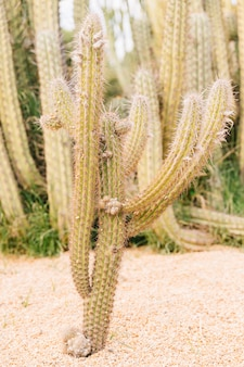 Cactus growing on desert