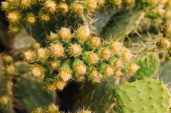 Cactus growing in garden