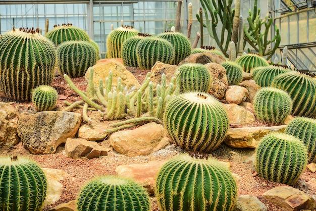 乾燥しているように見える庭で開催されたサボテン