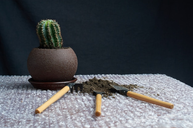 Cactus homeplant on the table with garden tools on gray background