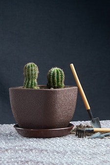 Cactus homeplant on the table with garden tools