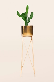 Cactus houseplant in a brass plant pot