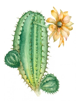 花のサボテン