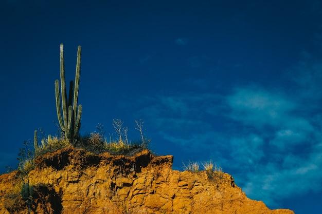 Кактус в пустынном пейзаже