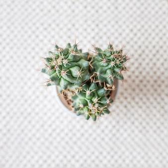 天然綿の麻ひもマットの敷物のポットの中のサボテン。緑の植物を使ったエコスタイル。手作りのモダンなマクラメ。ニットの家の装飾のコンセプト