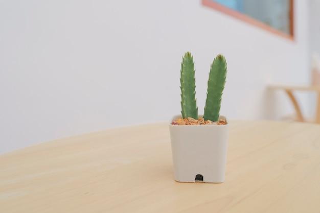 Кактус в маленьких белых горшочках на деревянном столе