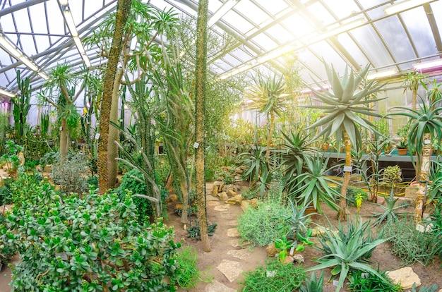 北アメリカの温室の熱帯砂漠のサボテン。