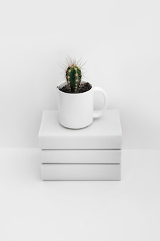 Cactus in white mug over the stacked of books isolated on white background
