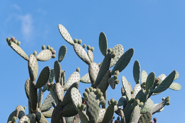 Cactus landscape. cultivation of cacti
