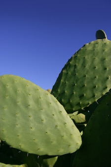 Cactus leaves and the sky