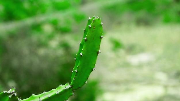 Cactus looks like finger