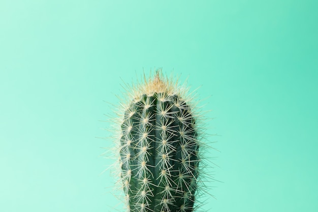 Cactus on mint surface and close up