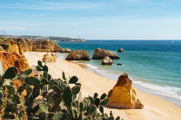포르투갈의 해변 근처 선인장.