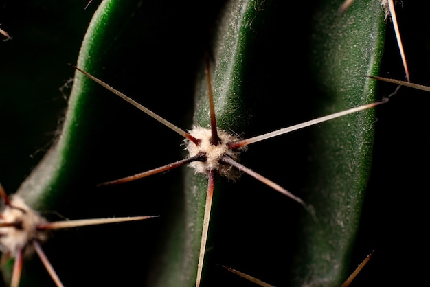 Cactus needles close up. floral background.