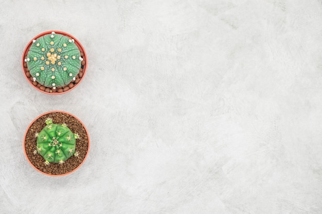 Cactus and notebook on the office table, grey concrete background, flat lay