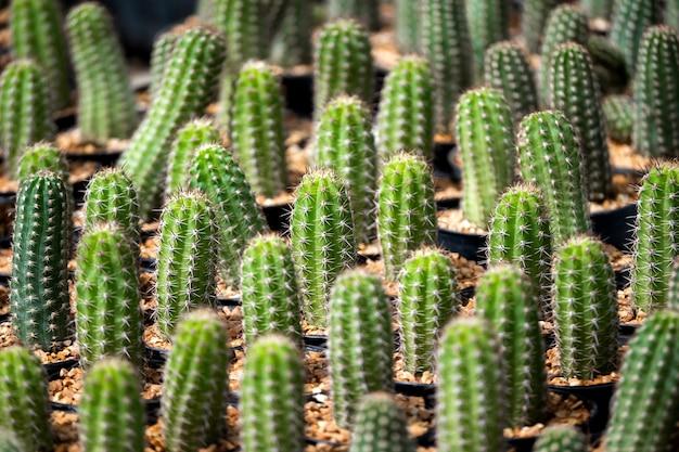 茶色の砂と緑の植物パターンの背景にサボテン