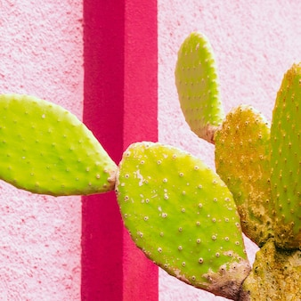 Кактус на геометрической стене. минимальная красочная концепция