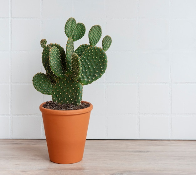 Cactus opuntia in pot on the table, house plant