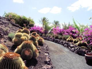 Cactus park in fuerteventura